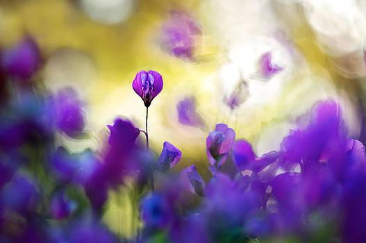 Spring Gathering by Sarah-fiona  Helme