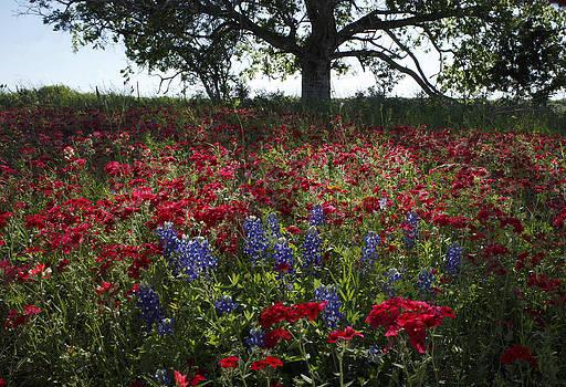 Susan Rovira - Spring Glory South Texas