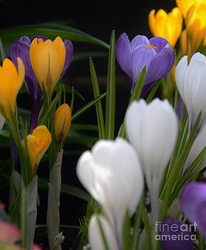 Spring Glow by Kathleen Struckle