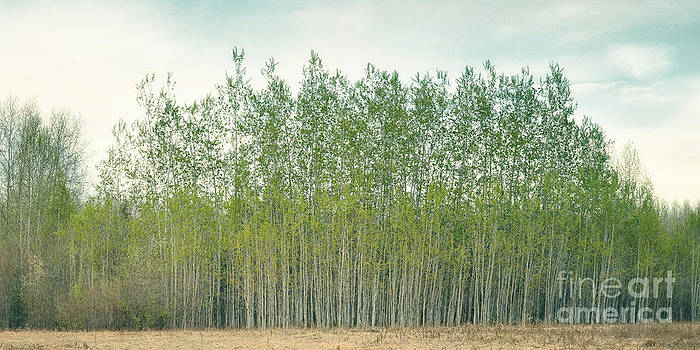 Spring green III by Priska Wettstein