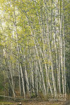 Spring Green by Priska Wettstein