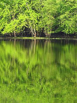 Spring Green Reflections by Lori Frisch