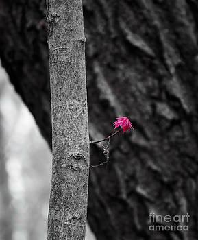 Steven Ralser - Spring Growth