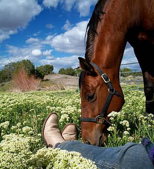 Spring Horse by Kasie Morgan