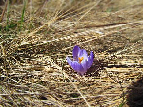 Spring in by Chepcher Jones
