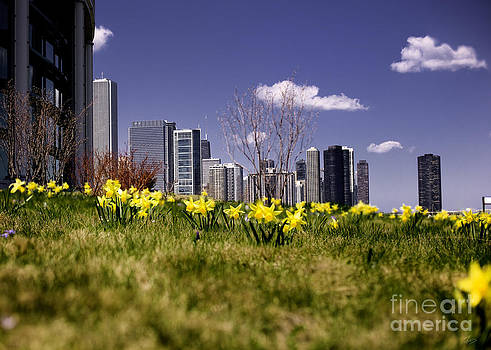 Spring In Chicago by F Icarus