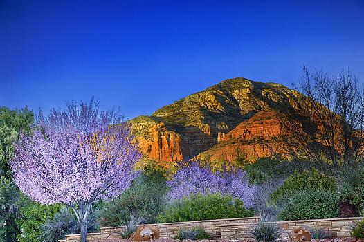 Spring in Sedona Arizona by Jodi Jacobson