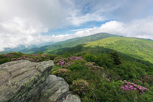 Spring in The Roan Highlands by Greg Dollyhite
