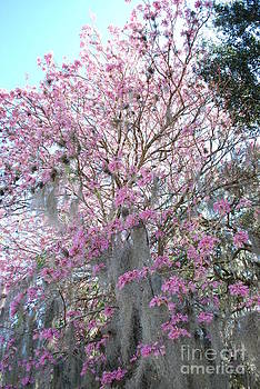Spring in the South by Terri West