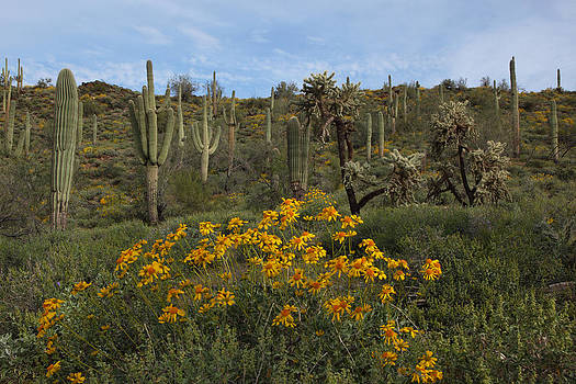 Susan Rovira - Spring in the Superstition Wilderness