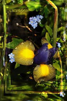 Nigel Watts - Spring Iris