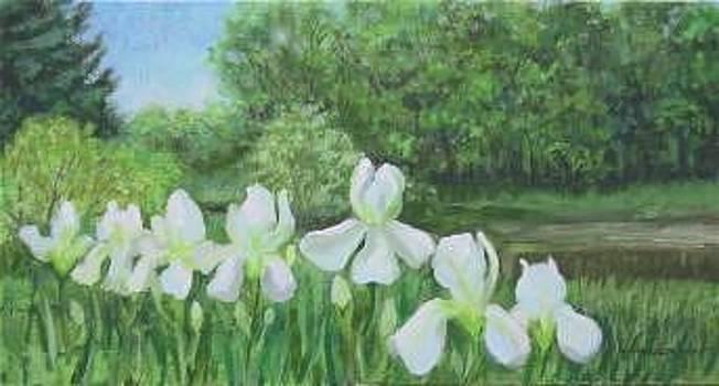 Spring Iris by Sherri Anderson