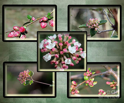 Gena Weiser - Spring is Here - Green