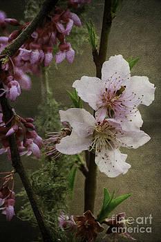 Spring is Here by Lori Mellen-Pagliaro