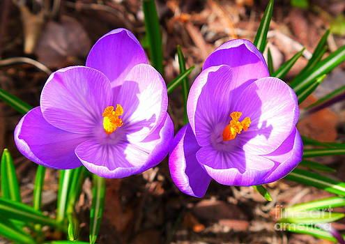 Spring is Here by Nancie DeMellia