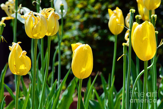 Spring is in the Air by Anne Marie Corbett