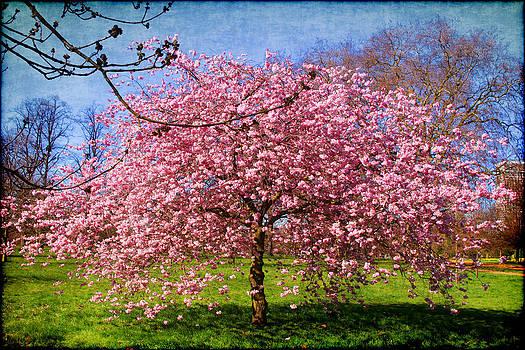 Spring by Joanna Madloch