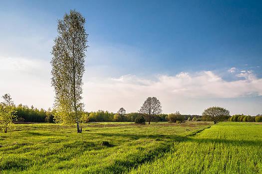 Spring Landscape by Michal Kabzinski