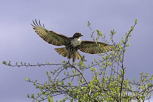 Tim Moore - Spring Leap