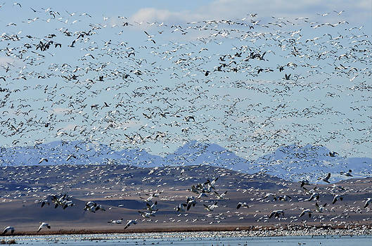 Kae Cheatham - Spring Migration #1