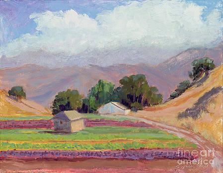 Spring Mix Lettuce Field in Salinas Valley by Suzanne Elliott