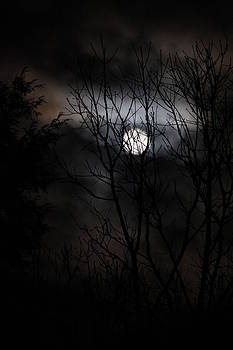 Spring Moon by Michael Blair