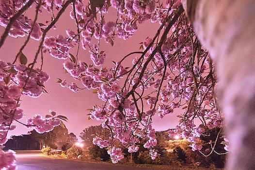 Daniel Furon - Spring Night