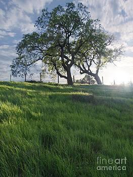 Stu Shepherd - Spring Oaks