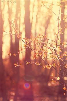 Spring Orange by Alivia Houdek