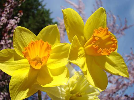 Baslee Troutman - Spring Orange Yellow Daffodil Flowers art prints
