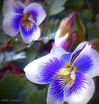 Spring Pansies by Mikki Cucuzzo