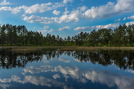 Spring Pond by Jim Neal