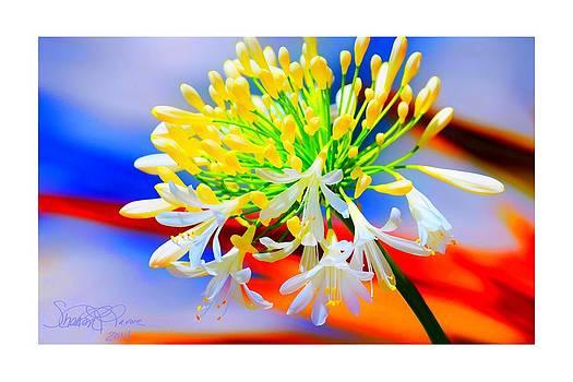 Spring Praise by Sharon  Lavoie