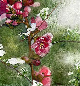 Spring by Rachel Osteyee