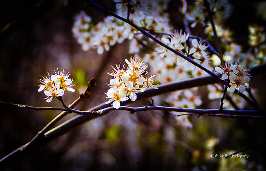 Spring Returns 2 by Al Griffin