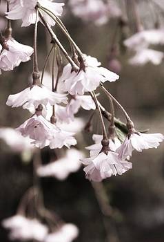 Robin Mahboeb - spring romance
