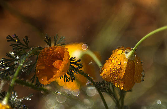 Spring Showers by Tracy Thomas