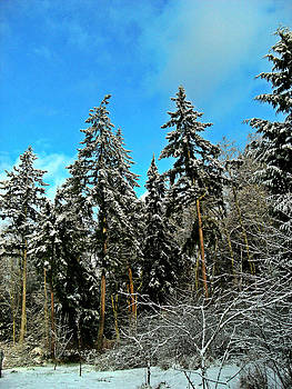 Kevin D Davis - Spring Snow
