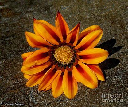 Spring soul by Karam Halim