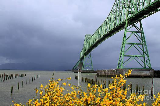Spring Storm by Dawn Kori Snyder