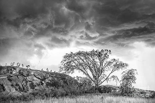 Sandra Bronstein - Spring Storm on the Serengeti Plain