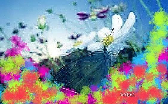 Sueyel Grace - Spring