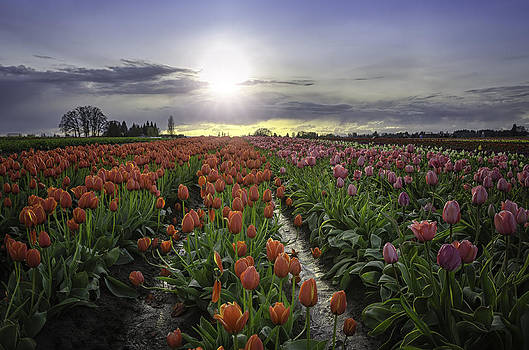 Spring Sunset with Color by Chris Malone