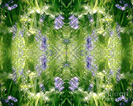 David Hargreaves - Spring Symmetry