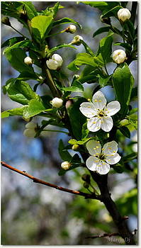 Spring tenderness  by Marija Djedovic