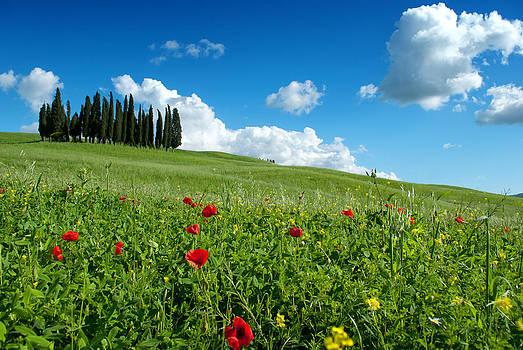 Spring time by Antonio Iannalfi