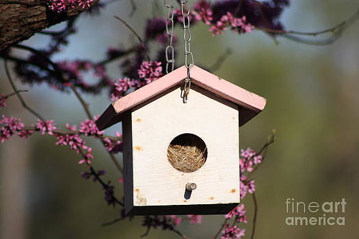 Spring Time Bird House by Robert D  Brozek