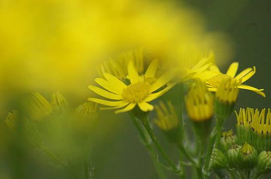 Spring time flower  by Tom Salt