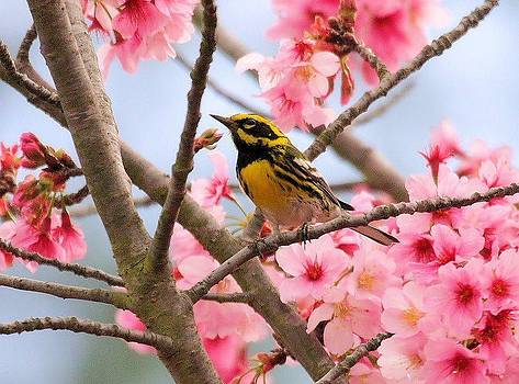 Spring Time by Janet Moss