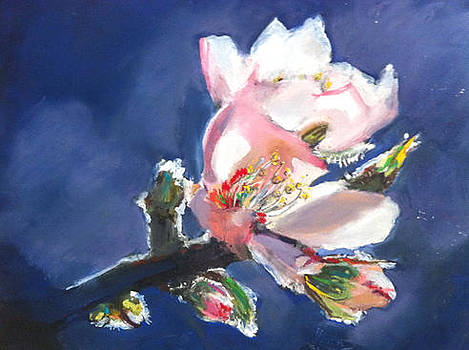 Spring Time by Shirley Roma Charlton